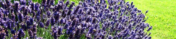 Gartenbau Starnberg kontakt gartenbau fröhling